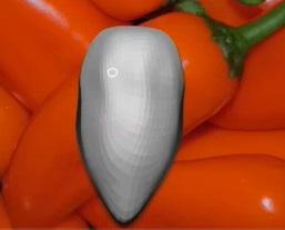 A simple chilli model