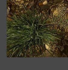 PM_Bamboo_files_image148